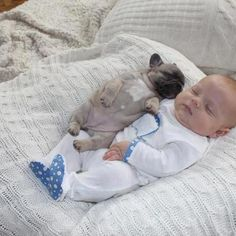 Animals Discover So cute I want to cry. 11 Incredibly Important Photos Of A Baby Covered In French Bulldog Puppies French Bulldog Puppies Baby Puppies Baby Dogs Cute Puppies Doggies French Bulldogs Puppy Cuddles Snuggles Baby Baby French Bulldog Puppies, Baby Puppies, Baby Dogs, Cute Puppies, Cute Dogs, French Bulldogs, Puppy Cuddles, Baby Bulldogs, Baby Baby