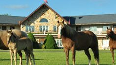 The animals will walk right up to you at Guggisberg Swiss Inn! The view from your room is spectacular too!