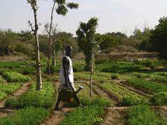 Este buscador online ayuda a alimentar a 1.6 mil millones de personas