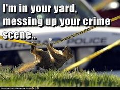 Am I messing up your crime scene? Law Enforcement Today www.lawenforcementtoday.com