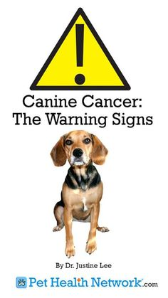 Canine Cancer: The Warning Signs