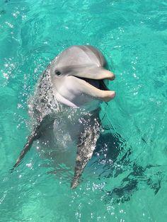 werfen sie einen blick auf diese delfine bilder - hier finden sie einen grauen delfin, dei in einem Beautiful Sea Creatures, Animals Beautiful, Cute Animal Photos, Animal Pictures, Animals And Pets, Funny Animals, Wild Animals, Dolphin Photos, Underwater Animals