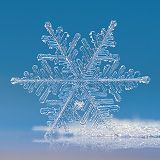 Snowflake macro photo: Cloud number nine, complex fernlike dendrite snow crystal, sparkling on clear blue background