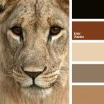 beige, color palettes for decor, color solution, colors for a decor, golden brown color, lion skins color, palettes for a designer, the color of a brandy