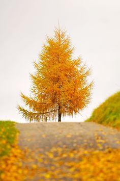 LAST TREE STANDING.....