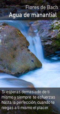 El agua de manantial promueve la flexibilidad interna, relaja el orgullo y nos alienta a disfrutar más de la vida. Bach Flowers, Alternative Medicine, Natural Medicine, Botany, Healthy Tips, Reiki, Remedies, Health Fitness, Nature