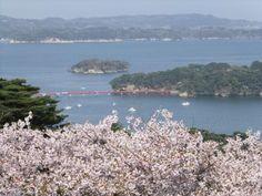 Miyagi, Matsushima Saigyou modoshi-no-matsu park(2)