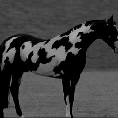 Can you see the word horse on his side?? Wow now that is cool!