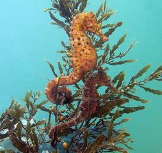 The last time I went to Sydney Aquarium, the seahorses had just had babies. There were thousands of them, it was amazing.