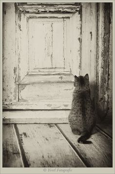 Someone, please open the door! kitty√