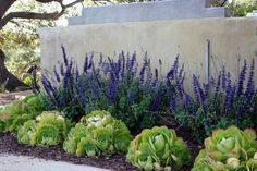 Succulents and purple plant