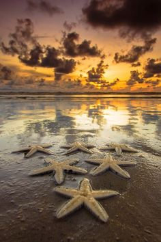 Julio Licinio: Asteroidea Sunset by Andrew Micheal Beautiful Sunset, Beautiful Beaches, Beautiful World, Pretty Pictures, Cool Photos, I Love The Beach, Beach Scenes, Ocean Life, Insta Photo