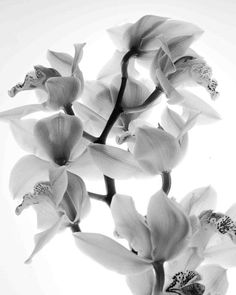 Orchids black and white photography by CedarTreePhotography