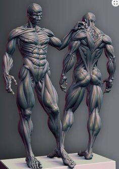 Human anatomy for artists, body drawing, anatomy poses, anatomy, muscle Human Anatomy For Artists, 3d Anatomy, Human Anatomy Drawing, Human Body Anatomy, Anatomy Sketches, Human Figure Drawing, Anatomy Poses, Muscle Anatomy, Anatomy Study