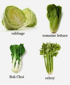 Celery, Lettuce, Romaine Lettuce and Bok Choy - Sound Oracle's  Horror Kitchen Sound Effects