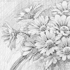 Pencil Drawings Of Flowers, Pencil Art Drawings, Drawing Sketches, Pond Drawing, Painting & Drawing, Daisy Painting, Still Life Drawing, Sunflower Art, Landscape Drawings