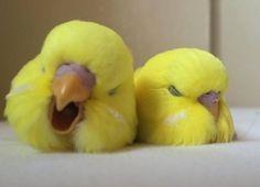 Cute Bird Pic