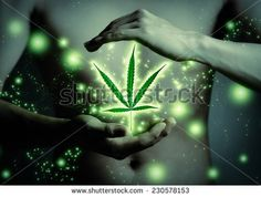 Marijuana Stock Photos, Images, & Pictures | Shutterstock
