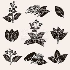 collection tobacco leaf set, editing size and color