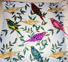 Completed birds. Photo does no justice unfortunately! #milliemarotta #colouring #animalkingdom