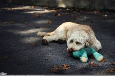 """Picture-A-Day (PAD n.1930) """"Ruff Life"""" ~Amy, DangRabbit Photography"""