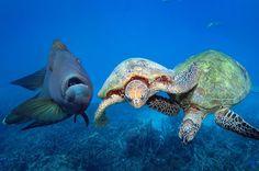 #turtles