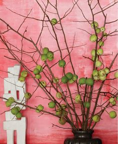 Fruit plant contrasting pink wall.