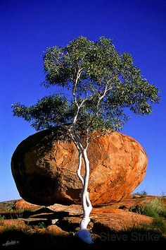 Ghost Gum Tree and Devil's Marbles, Northern Territory in Australia Outback Australia, Australia Travel, Place Of Birth, Beautiful World, Beautiful Places, Dame Nature, Natural Wonders, Amazing Nature, Wonders Of The World
