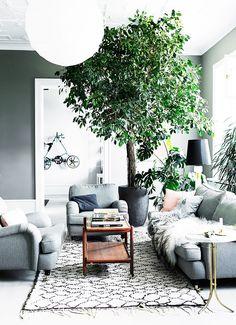 Trend Alert: Giant Trees Indoors via @MyDomaine