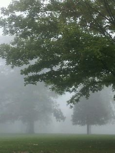 Foggy picture at the park.