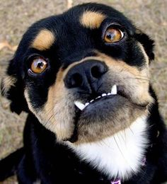 Dog Underbites: Cutest Pictures of Showing Teeth
