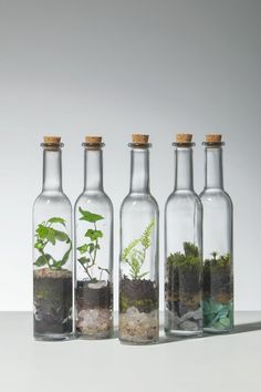 How To Make A Terrarium Artsy Crafty Pinterest
