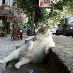 :-)  Watching all the girls go by.... If my cats were allowed outside this is what they would be doing... Lol