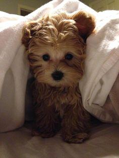 Adorable puppy love