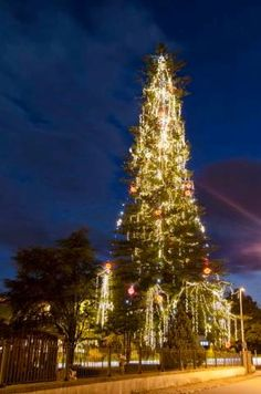 Did you set up your Christmas tree yet? Our city did, and it has more than 40.000 lights shining, and that is not even the most interesting fact about it. Viana do Castelo has the highest natural Christmas Tree in Europe!!! We would like to invite you to see our lovely city Christmas tree. This beautiful photo taken by our friend and local photograper, Américo Dias, on the very first day of December, 2014. • Portugal Tailor Made - Google+