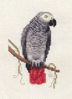 AFRICAN GREY PARROT, Bird, Full counted cross stitch kit + materials