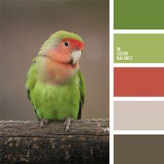 Peach faced love bird palette