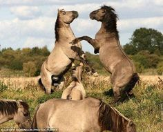 Unseen Horse Fight Pics