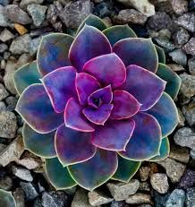 Image result for succulents tattoo
