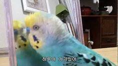 우리집 앵무새.. 이름이 '새'.. 개같은 새... 개새.. - YouTube