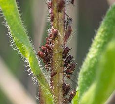 Bekæmp bladlus - 3 råd dine planter vil elske dig for at kende til Planters, Dining, Tips, Outdoors, Gardening, Patio, Baking Soda, Food, Lawn And Garden