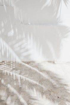light effects shadow palm trees summer vibes soft palette white neutral (source unknown) Pinterest Color, Outfits In Weiss, Foto Top, Shades Of White, White Aesthetic, Aesthetic Design, Light And Shadow, Sun Shadow, Belle Photo
