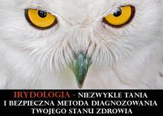 Oczy są zwierciadłem duszy...w przenośni i dosłownie - IRYDOLOGIA, czyli diagnozowanie z oczu - część 1: trochę historii