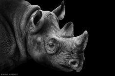 rhino portrait by Wolf Ademeit on 500px