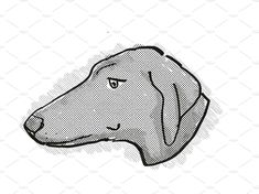 Azawakh Dog Breed Cartoon Retro Drawing by patrimonio on Retro cartoon style drawing of head of a Azawakh dog , a domestic dog or canine breed on isolated white background done in black and white. Retro Cartoons, Freelance Illustrator, Cartoon Styles, Retro Fashion, Dog Breeds, Black And White, Business, Drawings, Creative