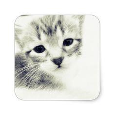 Baby Kittens Sticker http://www.damenroy.com /// http://www.youtube.com/damenroy
