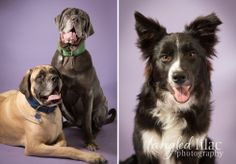 I was very excited to help Paw Placement of Northern Arizona with a pet portrait fundraiser!  We had a full day, an appointment every 10 minutes and met over 50 new animal friends.  We had a great time meeting everyone and as you can see from the photos below, even our new pet friends had a great time too!