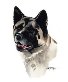 AKITA Dog Art Print Signed by Artist DJ Rogers by k9artgallery, $12.50