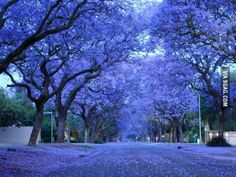 October and November in Pretoria, South Africa.