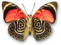 схематические рисунки бабочек: 19 тыс изображений найдено в Яндекс.Картинках